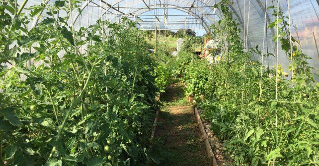 Travaux d'automne en permaculture